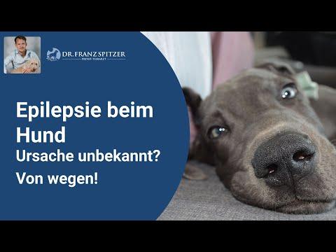 Epilepsie / epileptische Anfälle beim Hund - was du d ...