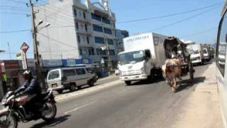 Wattala Sri Lanka  city photos gallery : Bullock Cart Coming Through Heavy Traffic In Wattala Sri Lanka