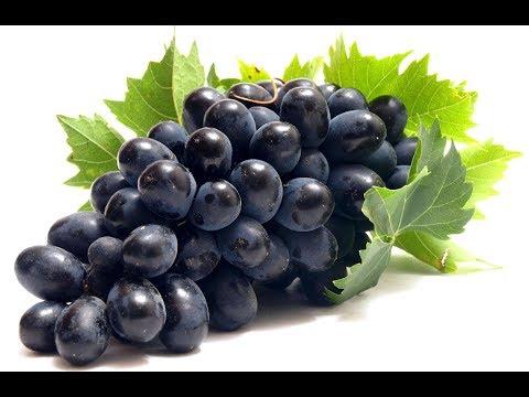 Производство саженцев винограда вРоссии