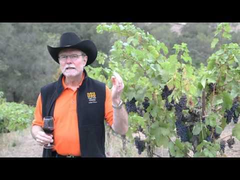 Big River Vineyard - Alexander Valley Zinfandel - Ravenswood Winery