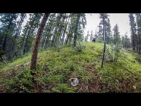 網友在林中騎行突然聽到動物的怒吼聲,當他轉頭看清動物的真容後立馬嚇到魂飛魄散...