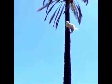 Mies käveli aurinkoisena päivänä kaupungilla, kun hän huomasi puunlatvassa ällistyttävän yksityiskohdan