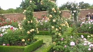 #91 Der Rosengarten von David Austin