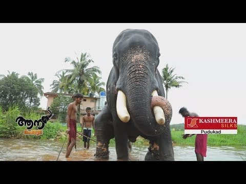 Video Thadathavila  sivan (aana peruma  episode -22  ) download in MP3, 3GP, MP4, WEBM, AVI, FLV January 2017