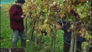 Sedlescombe United Kingdom  City new picture : Sedlescombe Organic Vineyard