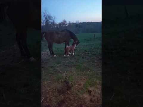 """Hevonen antaa melkoisen potkun pehmolelulle – """"Mikä ihme tuo on?"""""""