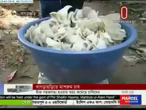 Mushroom cultivation in Khagrachari (18-03-2018)