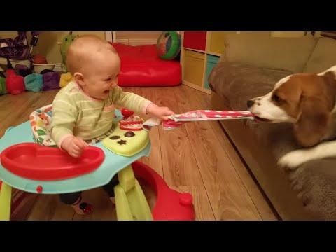 Dog And Baby Play Tug-Of-War