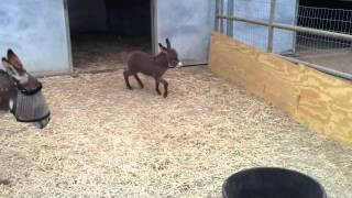 Adorable Baby Donkey Is Filled With So Much Joy!