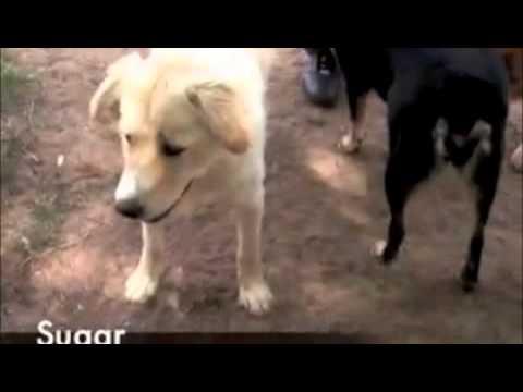 new-mexico-nel-carcere-femminile-un-programma-di-recupero-per-i-cani-dei-rifugi-116