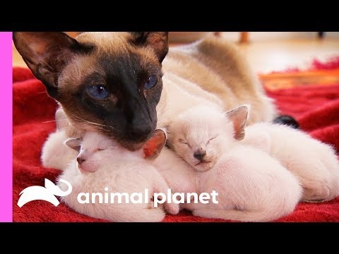 Sandra the Cat is a Great Mom