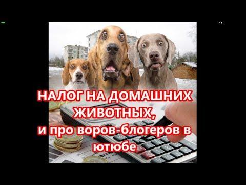 НАЛОГ НА ДОМАШНИХ ЖИВОТНЫХ и воров блогеров - DomaVideo.Ru