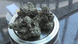 Gelato Marijuana Monday Toronto Edition by Urban Grower