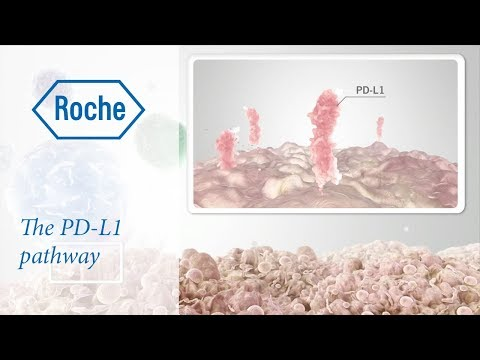 Video Cancer immunotherapy: the PD-L1 pathway download in MP3, 3GP, MP4, WEBM, AVI, FLV January 2017