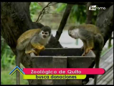 Zoológico de Quito busca donaciones