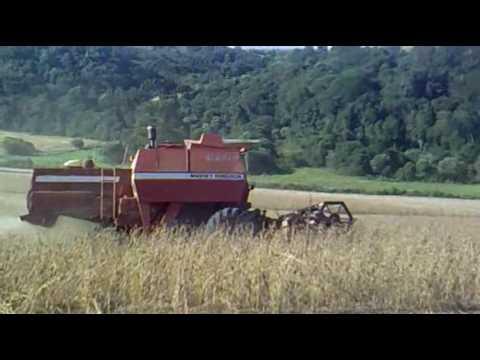 Colheita em Mariópolis - Harvest in Mariópolis PR (Brazil)