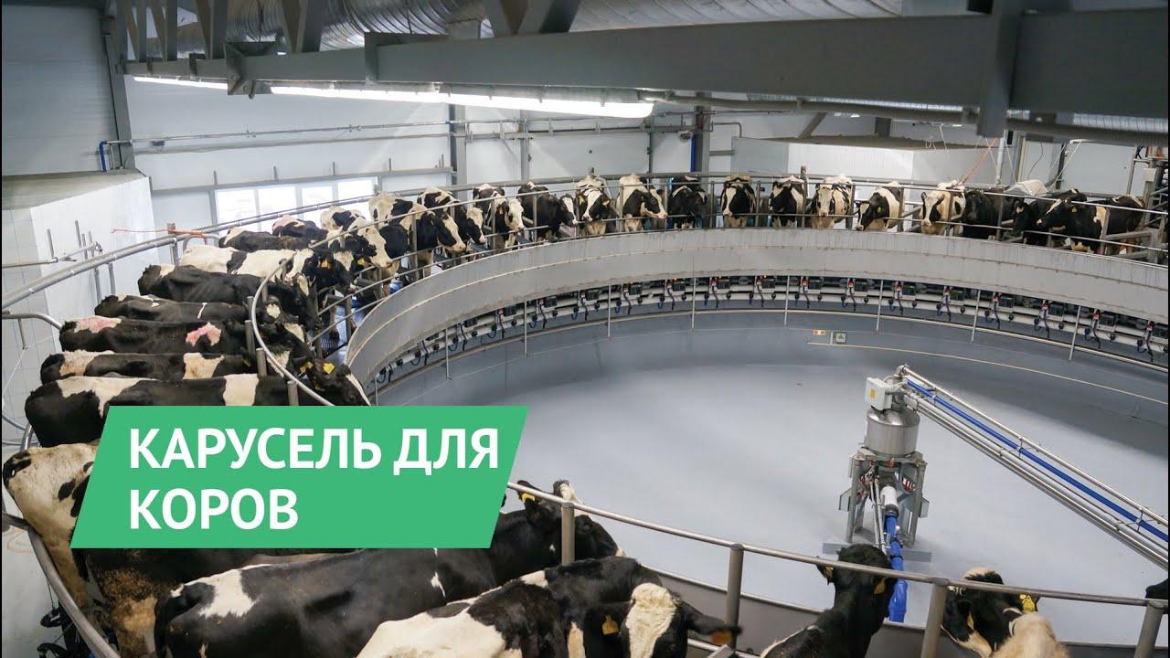 Карусель для доения коров