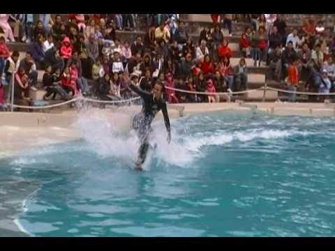 show de delfines de SIX FLAGS MEXICO