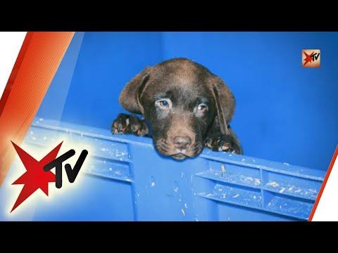 Hundewelpen aus dem Internet: ein brutales Geschäft – D ...