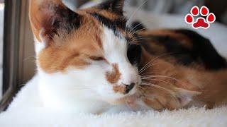 創作感動系はスルーするけど、猫系バイラルメディアはついつい見てしまう(思うつぼ。 基本ネタシェア以外はしないけどもね