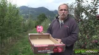 #1352 Redlove Verpackung für den Supermarkt