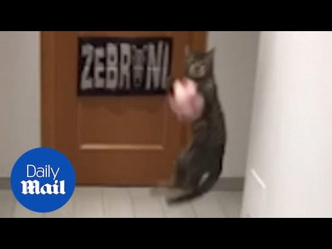 Ο τερματοφύλακας είναι ... γάτα