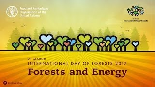 InternationalDayOfForests #trees #treenews #loveforests The International Day of Forests was established on the 21st day of March, by resolution of the United ...
