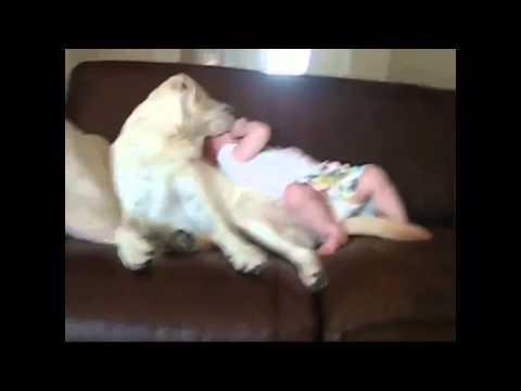 Hài hước của trẻ em và những chú chó ngộ nghĩnh