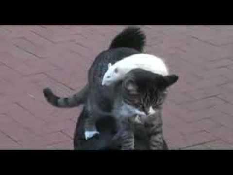 il cane, il gatto e il topo!