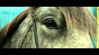 Nonton Of Horses And Men   Trailer Film Subtitle Indonesia Streaming Movie Download