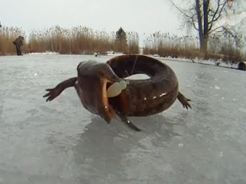 incredible fishing in the ice
