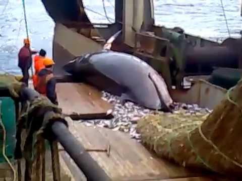 рыбацкий траулер видео