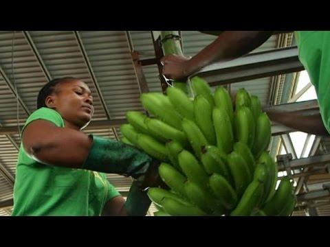 Αγκόλα: Στροφή από τον «μαύρο» στον «πράσινο χρυσό» – focus