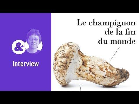 Anna Lowenhaupt Tsing et le champignon de la fin du monde