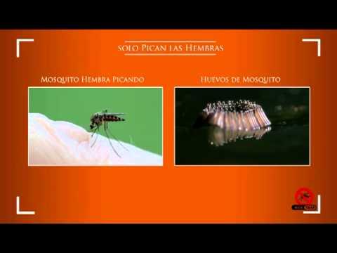 Video: Jata MT8 vábnička (MOSTRAP) pro trvalou likvidaci komárů - český dabing (plná verze)