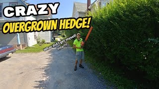 1. Crazy Overgrown Hedge! | Sthil HS 45 | New Intro!