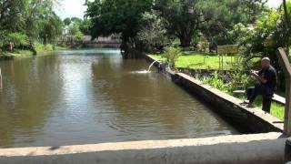 Pesca De Tilapia Para Fritar
