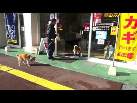 這家店在電動門安裝了一個「犬用」按鍵,只要有客人走到門口…店家的萌犬就會跑過來服務!