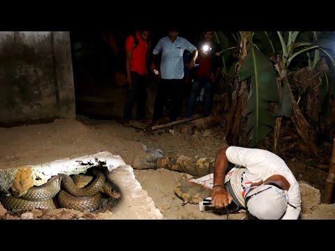 इस गांव में नाग नागिन ने मचाया कोहराम,भयानक फुंकार,आधी रात करना पड़ा उद्धार।2 Cobra midnight rescue
