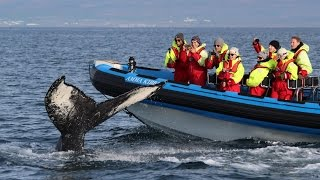 Husavik Iceland  city photo : Whale Watching World of Gentle Giants Húsavík Iceland - Walbeobachtung Island