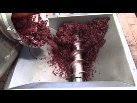 Bomba de vendimia TecamySer BACO_BACO TecamySer winery pump I