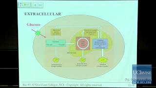 Bio Sci 93: DNA To Organisms. Lec. 11: Cellular Respiration
