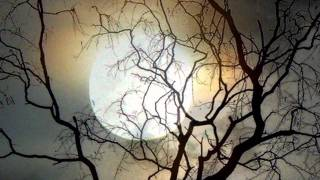 E.S Posthumus - Moonlight Sonata