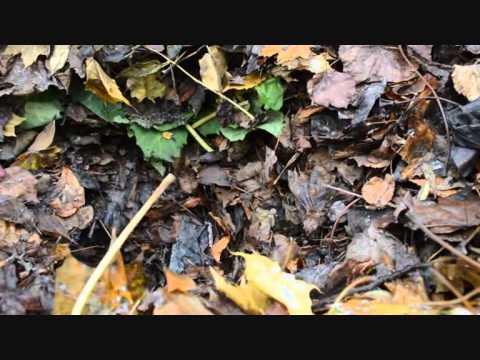 Composting leafs