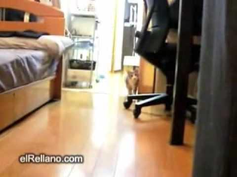 Gato que juega al pica pared
