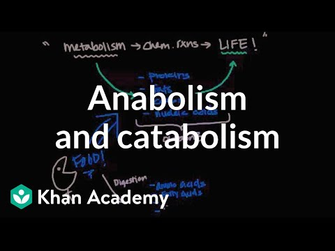 Overview of Metabolism: Anabolism and Catabolism