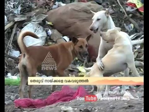 Animal Welfare Board of India file petition against killing stray dogs in Kerala