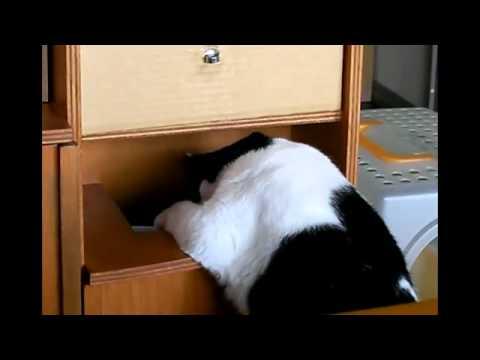 Chú mèo béo quá, làm gì cũng khó =))