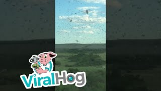 "Occurred on July 19, 2017 / East Kazakhstan Region""Driving through a cloud of locusts.""TO SEE THE HOTTEST VIRAL VIDEOS DAILY...Subscribe to us on YouTube: https://goo.gl/A0gBKkLike us on Facebook: https://goo.gl/XQWqJtFollow us on Instagram: https://goo.gl/NMq8dlFollow us on Twitter: https://goo.gl/pF8XopViralHog is the resource for the best viral content.  Submit your own great video and make money: https://goo.gl/yejGkmContact licensing@viralhog.com to license this or any ViralHog video."