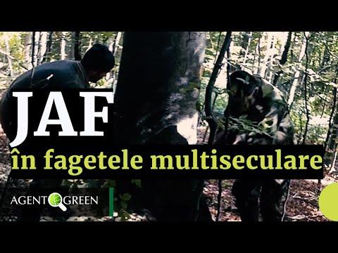 Jaf in fagetele multiseculare din Parcul National Semenic - Cheile Carasului